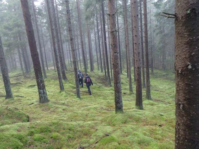 Fina skogar