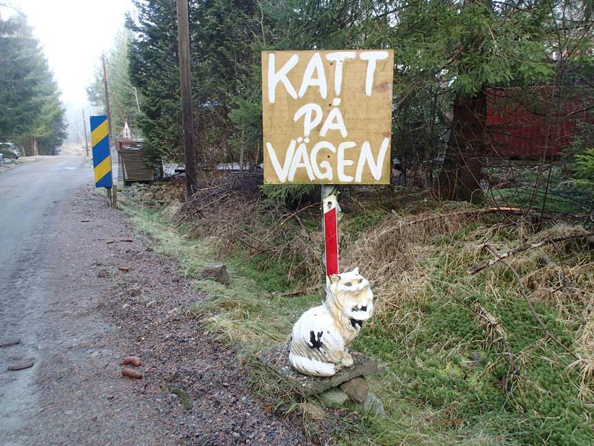 Katt på vägen
