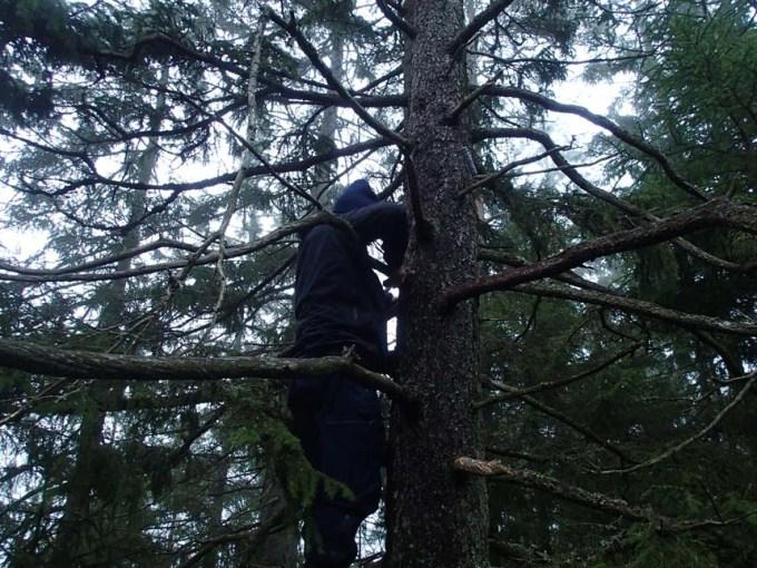 En ovanlig fågel siktades i detta träd...