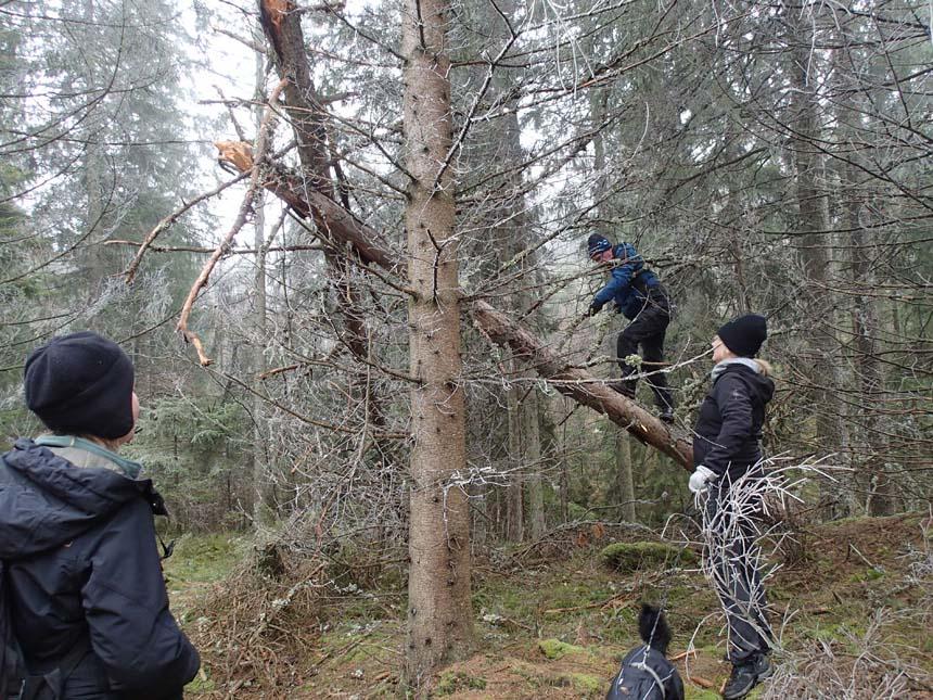 Hur man lurar upp en geocachare i ett träd utan burk....